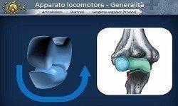 Lezioni di Anatomia: Apparato locomotore - Associazione Agorà